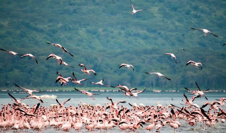 Muxima - Turismo sustentável em países lusófonos