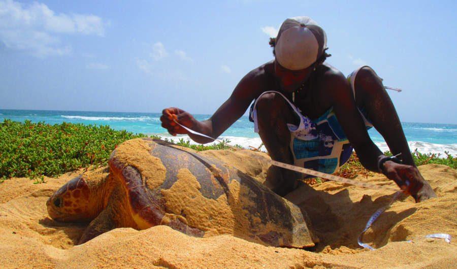 Muxima - ONG Projeto Biodiversidade - Nesting turtle
